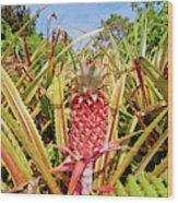 Pineapple Plant Ananas Pico Island Azores Portugal Wood Print