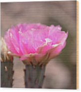 Pink Cactus Bloom Wood Print
