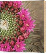 Pink Cactus Flower In Full Bloom Wood Print