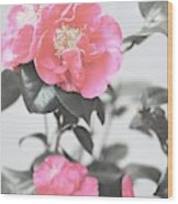 Pink Camellia. Shabby Chic Collection Wood Print