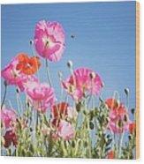 Pink Flowers Against Blue Sky Wood Print