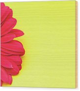 Pink Gerbera Daisy On Yellow Background Wood Print