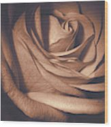 Pink Rose Petals 0219 Wood Print
