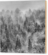 Pinsapos Into The Woods. Bw. Foggy Sunrise Wood Print