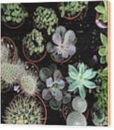 Plant Collection Wood Print