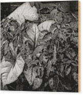 Planter Wood Print