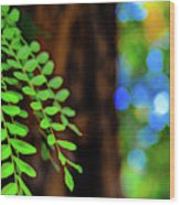 Plants, Trees And Flowers Wood Print