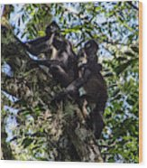 Playing In The Treetops Wood Print