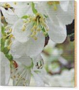 Plum Blossoms 2 Wood Print