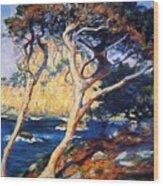 Point Lobos Trees 1919 Wood Print