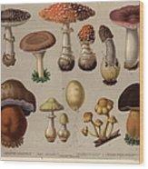 Poisonous Fungi Wood Print