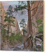 Ponderosa Pines In Slot Canyon Wood Print