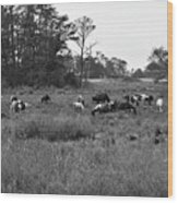 Pony Herd Bnw Wood Print