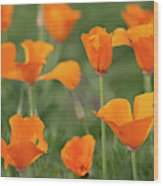 Poppies In The Breeze Wood Print