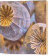 Poppy Seed Pods 2 Wood Print