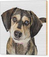Portrait Cute Medium Size Crossbreed Dog Wood Print