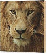 Portrait Male African Lion Wood Print