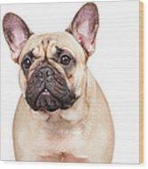 Portrait Of A French Bulldog Wood Print