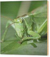 Portrait Of A Great Green Bush-cricket Sitting On A Leaf Wood Print