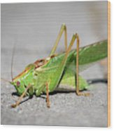 Portrait Of A Great Green Bush-cricket Sitting On The Pavement Wood Print