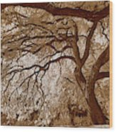 Portrait Of A Tree In Infrared Wood Print