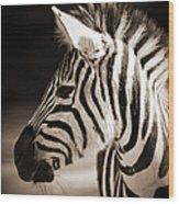 Portrait Of A Young Zebra Wood Print