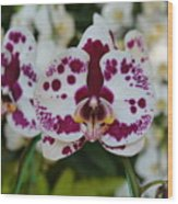 Portrait Of An Orchid Wood Print