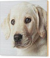 Portrait Of Blond Labrador Retriever Wood Print