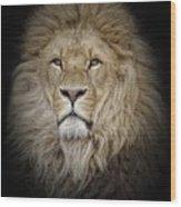 Portrait Of Lion Against Black Wood Print