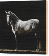 Portrait Of Standing Grey Horse Wood Print