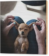 Pov - Pets Wood Print