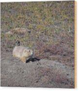Prairie Dog 1 Wood Print
