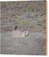 Prairie Dog Wood Print