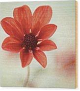 Pretty Orange Flower Wood Print