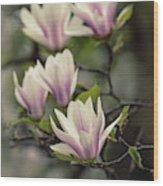 Pretty White And Pink Magnolia Wood Print