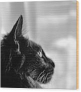 Profile Of A Long Haired Cat In Window Wood Print