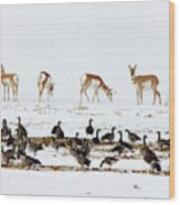 Pronghorn Antelope And Geese Wood Print