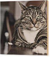 Proud Cat Wood Print