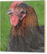 Proud Cockerel Wood Print