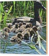 Proud Mother Duck Wood Print