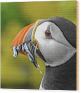 Puffin With A Mouthful Wood Print