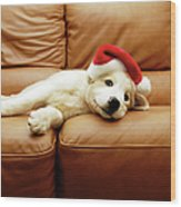 Puppy Wears A Christmas Hat, Lounges On Wood Print