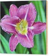 Purple And Yellow Flower Wood Print
