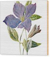 Purple Clematis Flower Wood Print