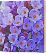 Purple Flowers In The Morning Dew Wood Print
