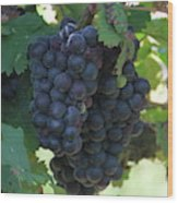 Purple Grape Bunches 13 Wood Print