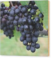 Purple Grape Bunches 20 Wood Print