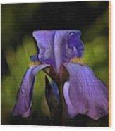 Purple Iris And Dewdrops II Wood Print