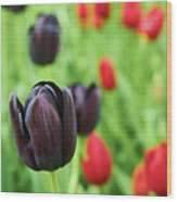 Purple Tulip Wood Print