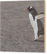 Quick Hurry - Gentoo Penguin By Alan M Hunt Wood Print